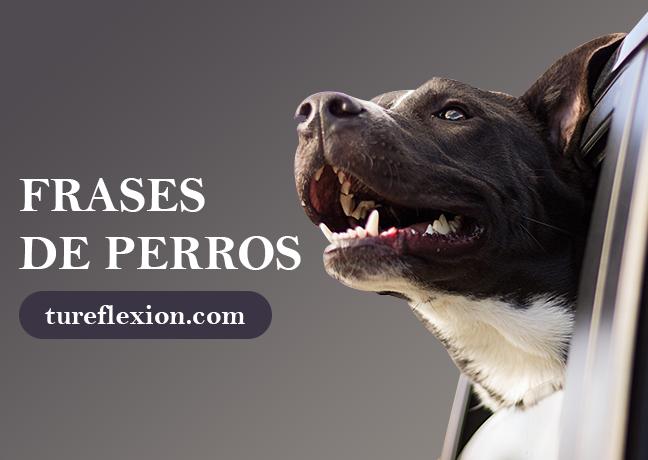 Frases Tiernas Sobre Perros Que Llegarán A Tu Corazón Tu